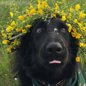 stamper with flowers on his head and his tongue sticking out