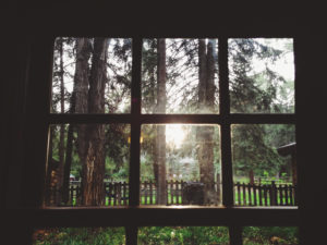 looking out a cabin window into the wildnerness
